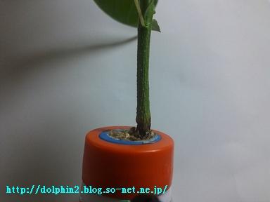 DSC_3428b0714.JPG